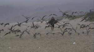 (faith) Herding_Birds